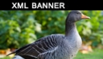xml banner rotator slideshow gallery