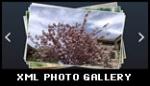 xml photo gallery image gallery